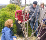 Seedsaver members learn pruning during a monthly meeting. Click image