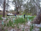 HREP Revegetation Project reduced